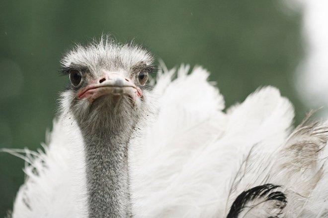 "Breeding birds' and domestic animals' zoo ""Raiba plunksna"" (""Spotted feather"")"