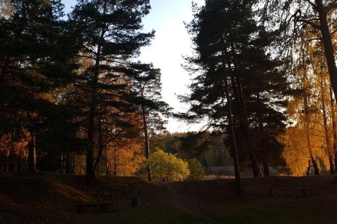 Kairiai pine forest