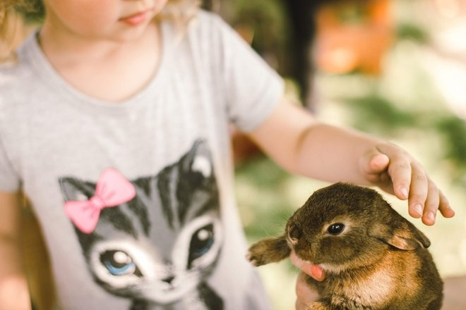 Rabbit therapy