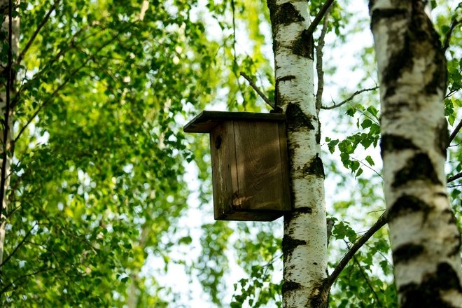 The first open-air museum of nesting boxes in Lithuania