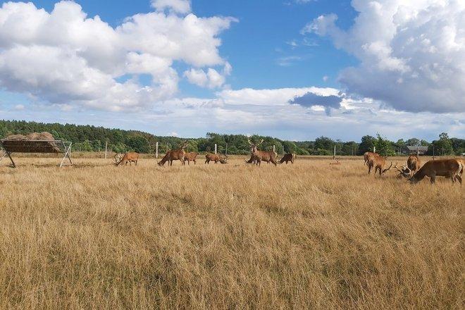 Algirdas Laucevičius' deer farm