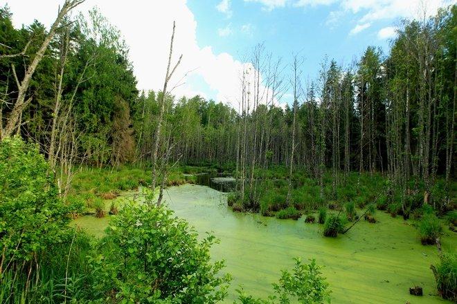 Smirdėlė swamp trail