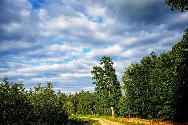 Miško taku (Daugėliai - Padarbų miškas - Daugėliai)