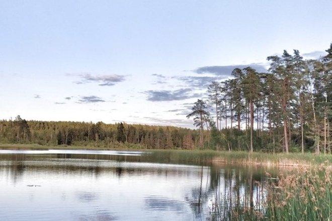 Vainagiai forest trail